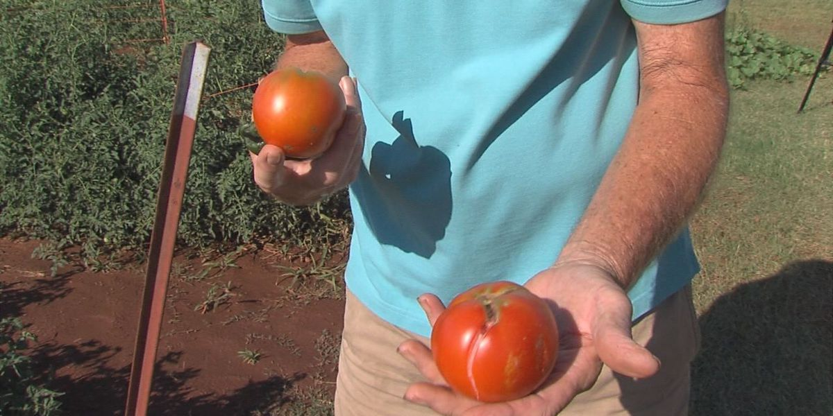 6th annual Tomato Festival this weekend