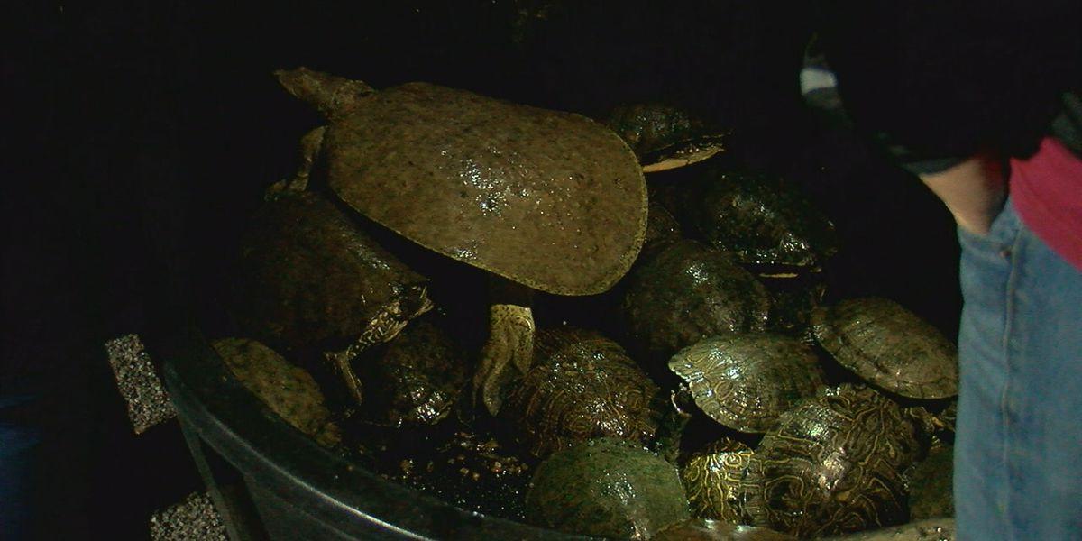 Turtles rescued from fire at Medicine Park Aquarium