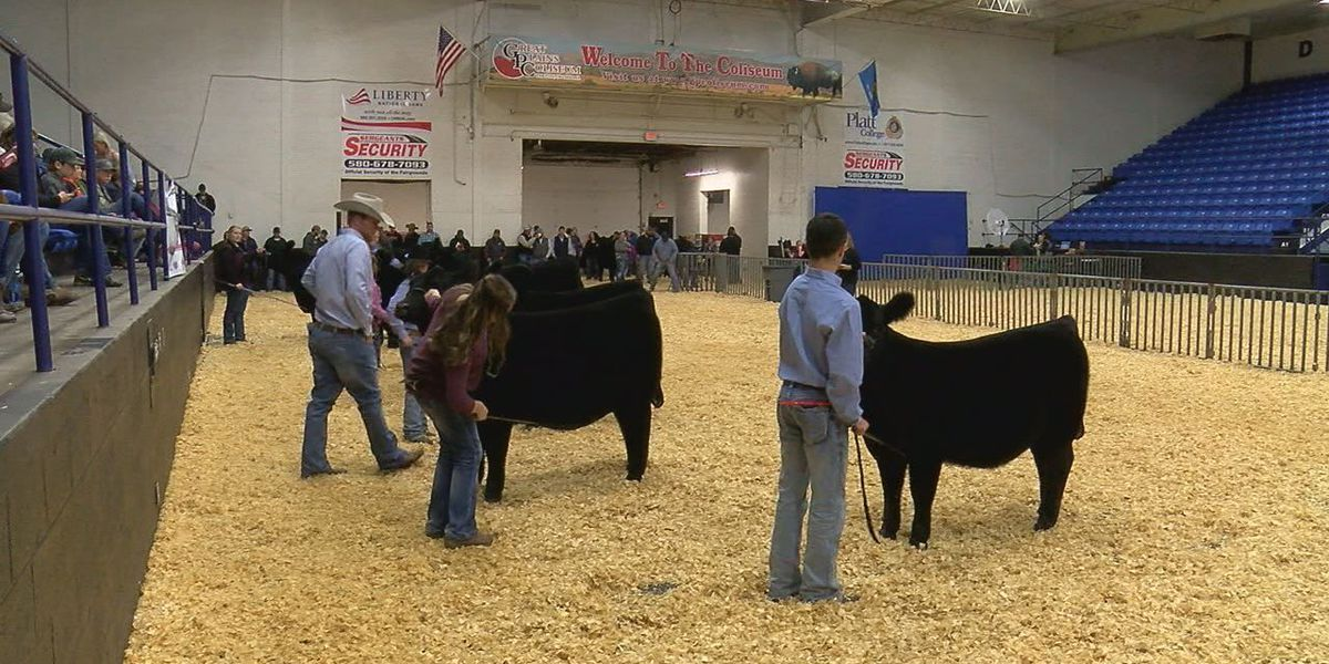Kids show off cattle at Wichita Mountains Classic