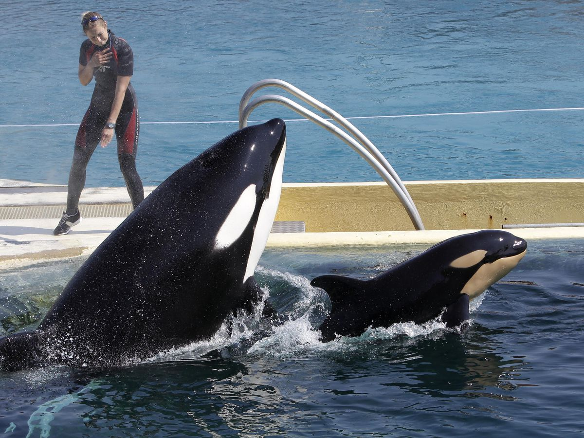 France to ban use of wild animals in circuses, marine parks