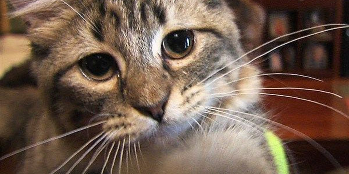 Comanche County Humane Society rescues 25 pets