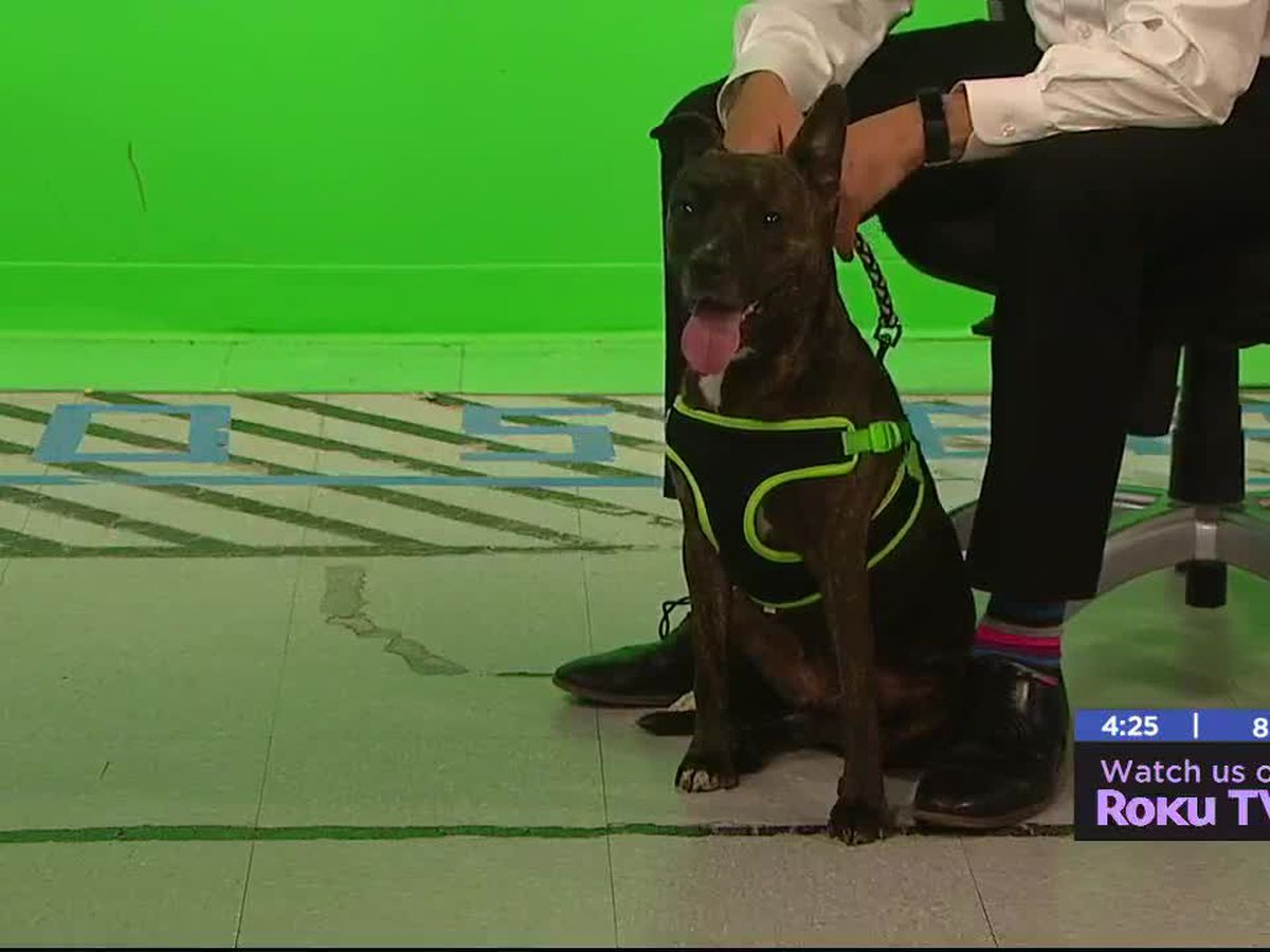 Furry Friend Friday: Meet Doggy Parton