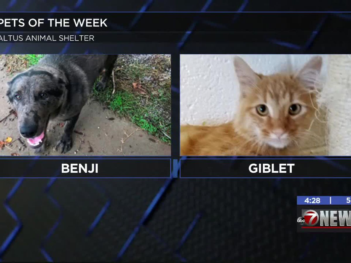 Altus Pets of the Week: Benji, Giblet, Dave and Drifter