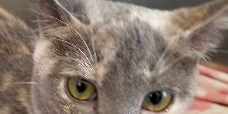 Altus Pets of the Week: Lady, Tiki, Dakota and Patricia