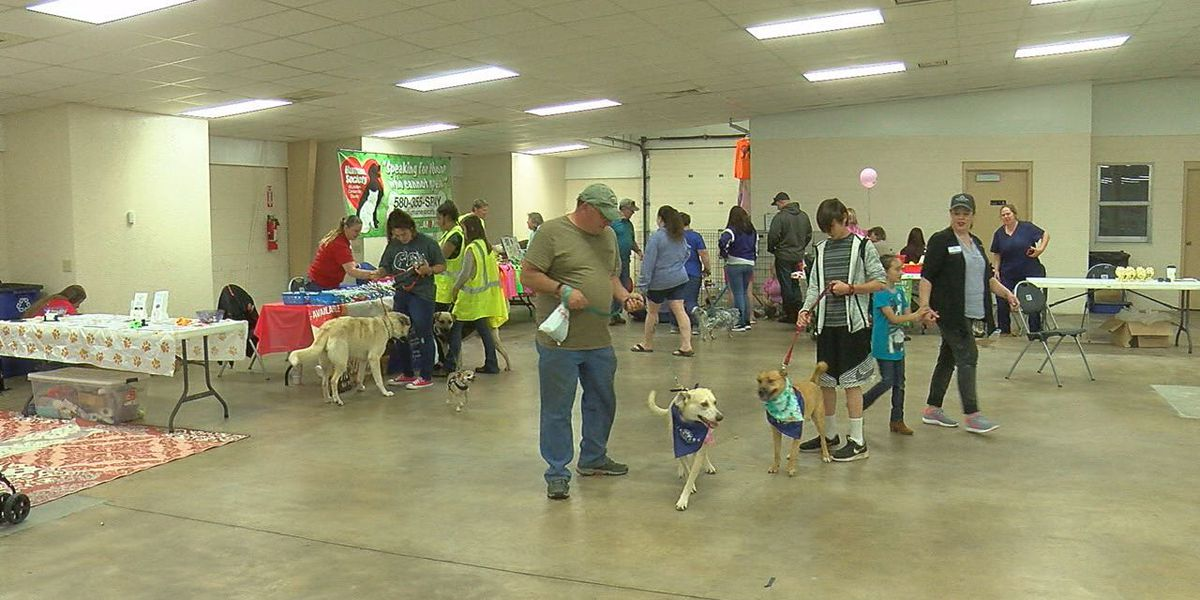 All things pets offered at Paws for a Cause