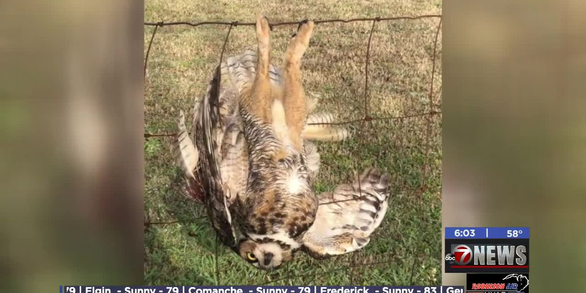 Deputies rescue injured owl