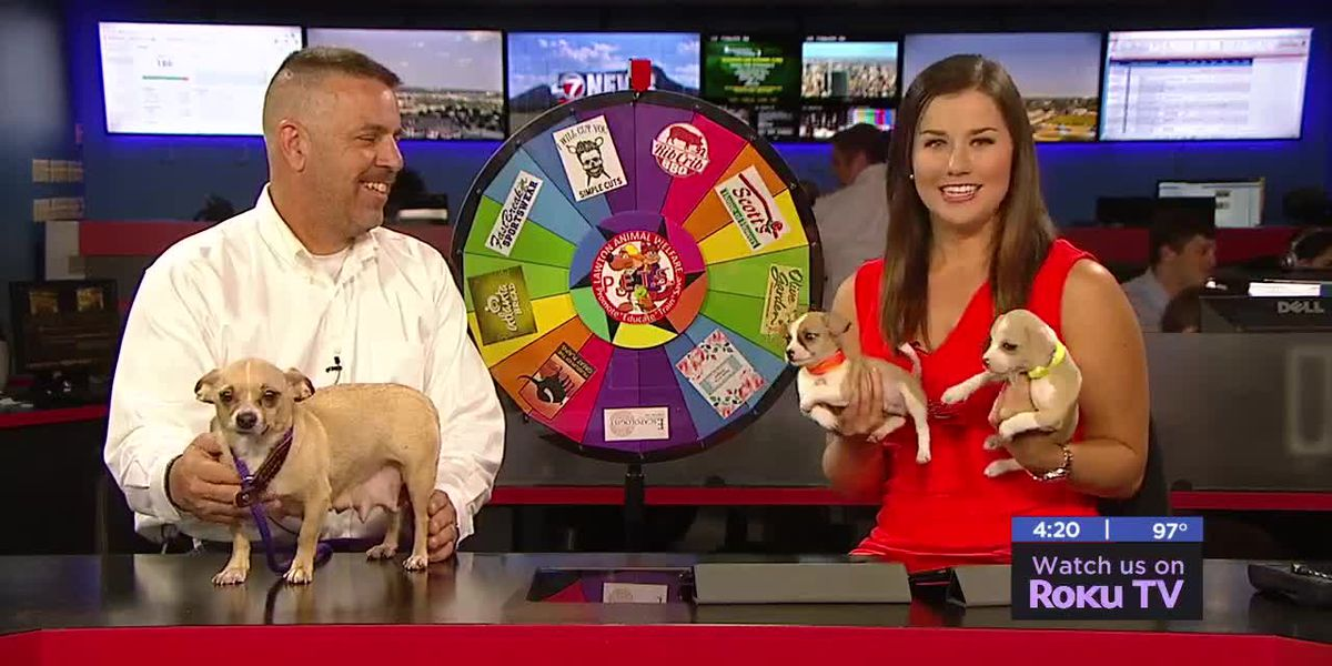 Furry Friend Friday: Meet Baby, Taco and Bell