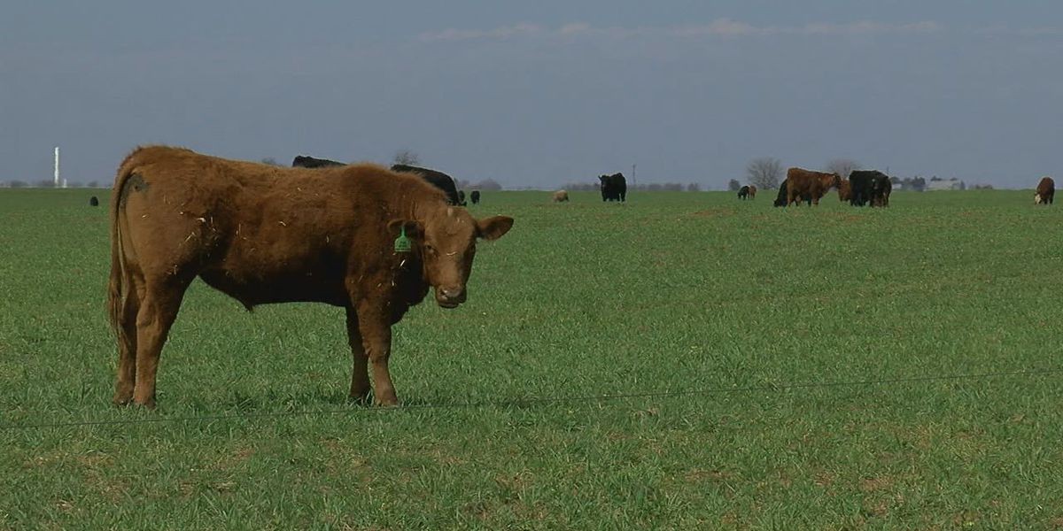 Coronavirus affects agriculture business in Oklahoma