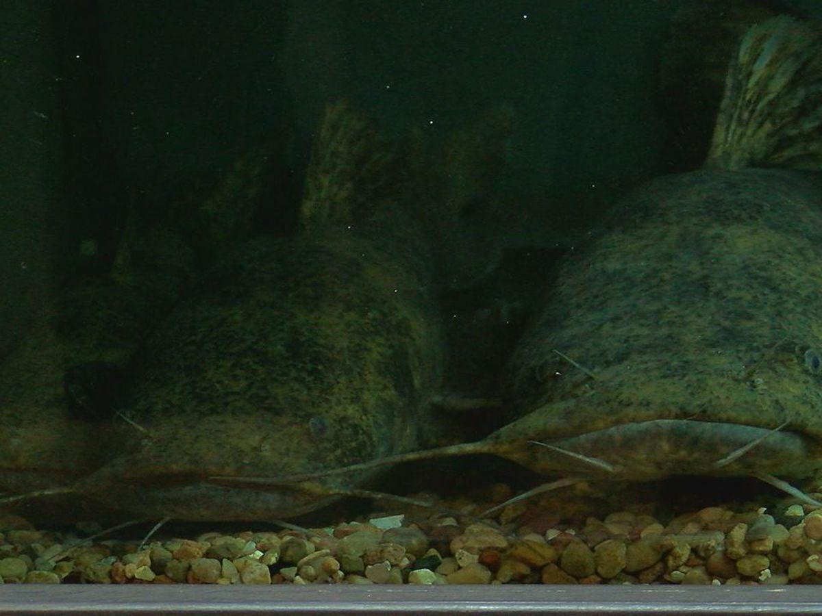 Work continues at Medicine Park Aquarium despite coronavirus closure