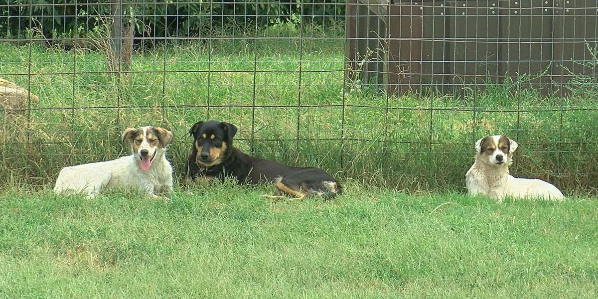 GRAPHIC: Neighbors upset after Kiowa County dogs seen eating each other