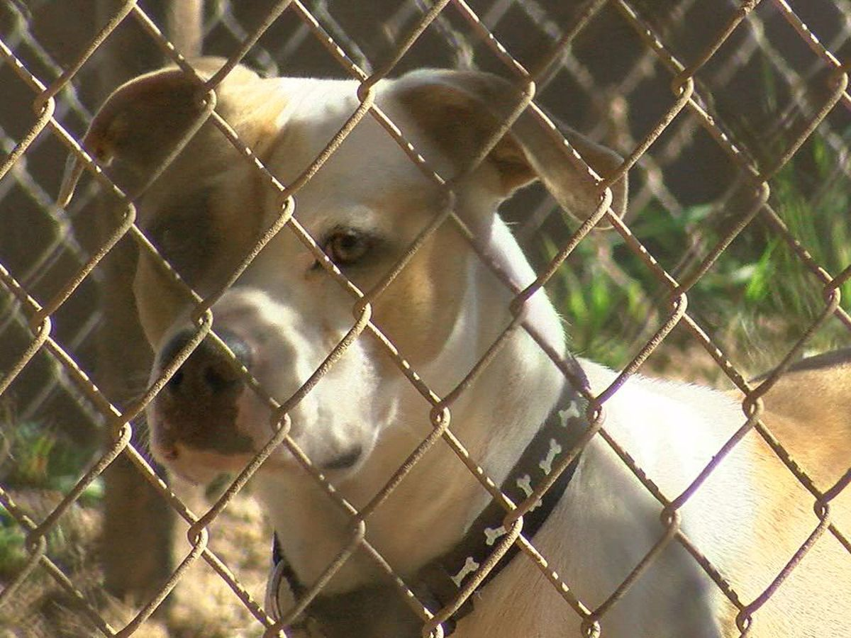 Stephens County Humane Society invites the community to foster a pet for the Thanksgiving Holiday