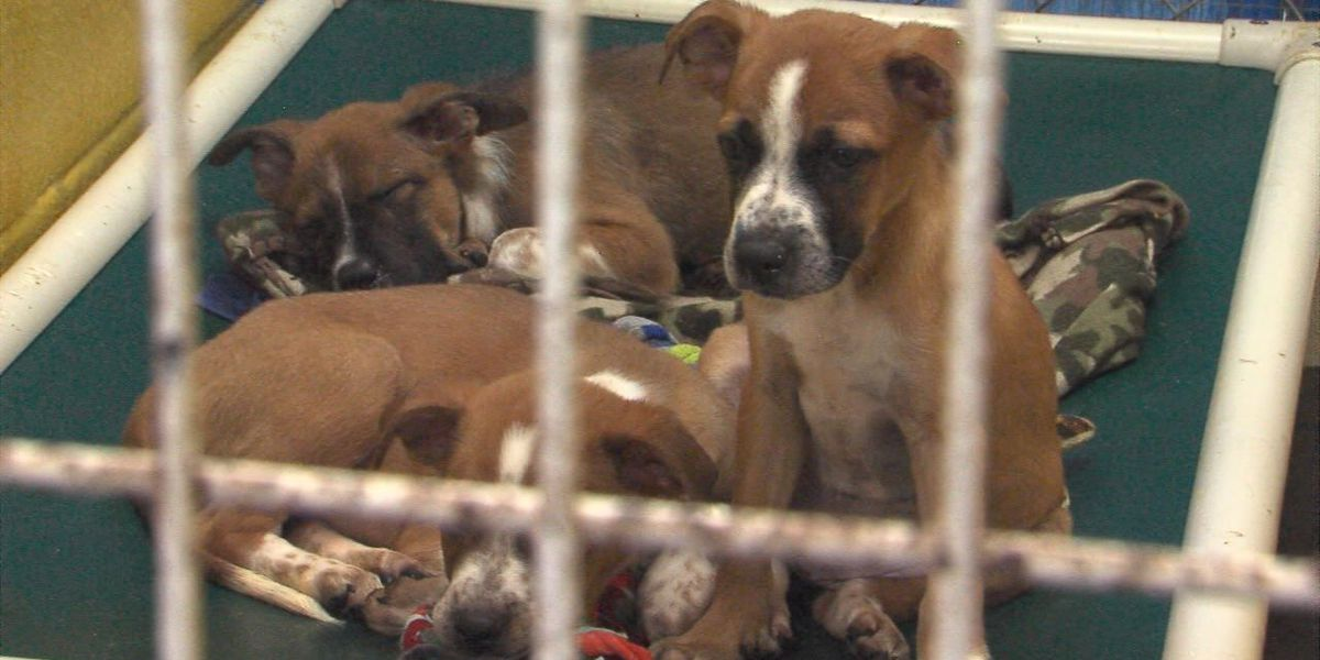 'Clear the Shelters' event aims to find pets new homes
