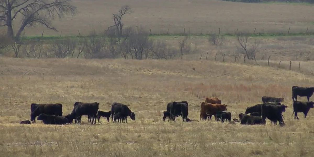 Oklahoma Farm Bureau says relief money won't cover losses