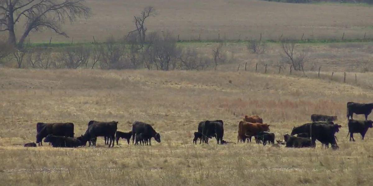 Oklahoma Farm Bureau says relief money won't cover losses