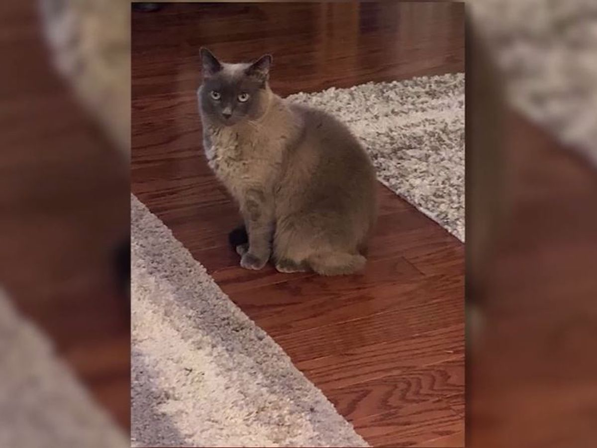 Cat dies after Texas animal hospital accidentally gives her euthanasia drug instead of vaccine