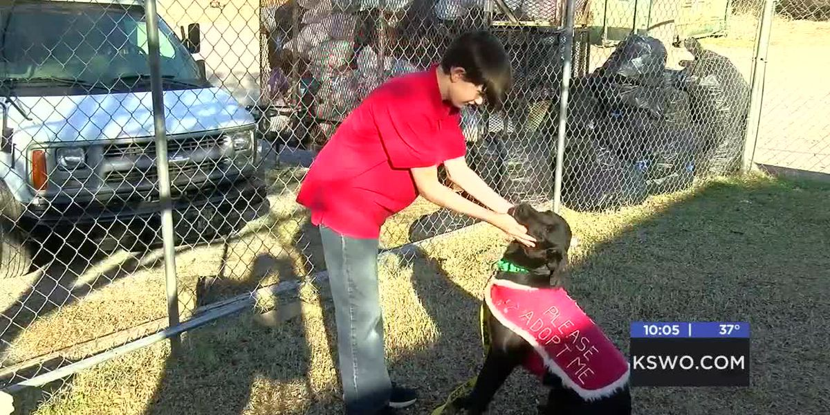 Ean's love for Stephens County Humane Society helps their pets find a forever home