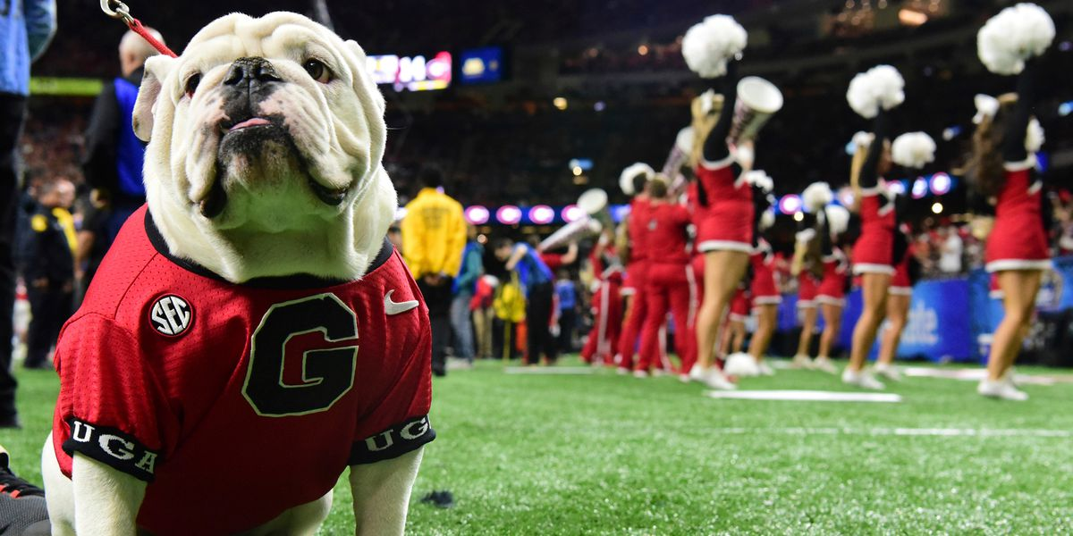 PETA wants Georgia to retire Uga because 'HE LOOKS MISERABLE!'