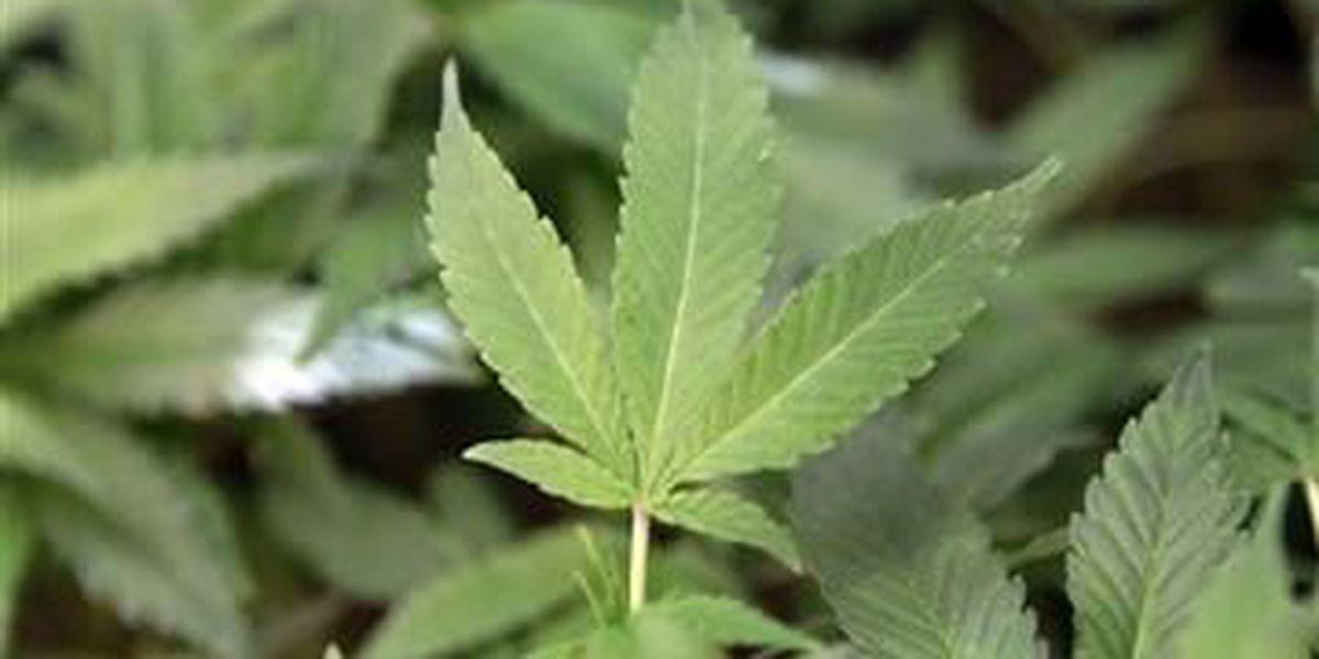 Medical marijuana legislative group asking for public input