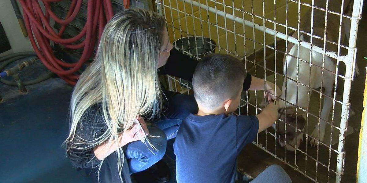 Adoption fees waived for Black Friday at Lawton Animal Welfare