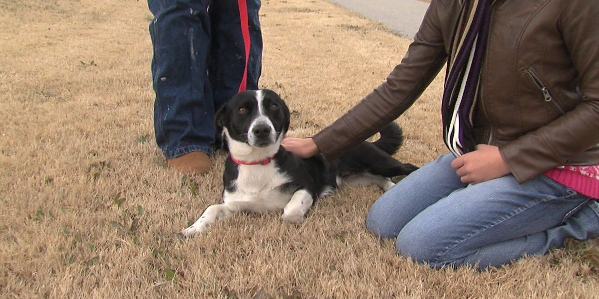 Elgin animal shelter held dog meet & greet