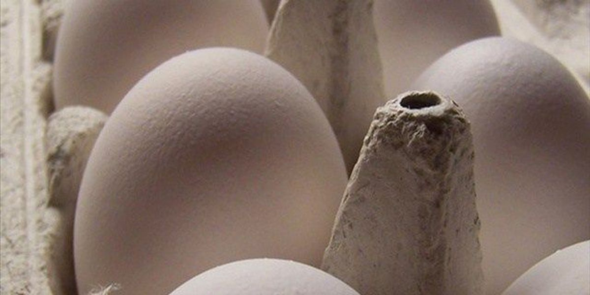 12 states launch new legal challenge to California egg law