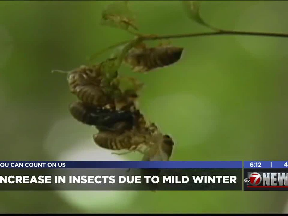 Pest control say mild winter causes increase in insects