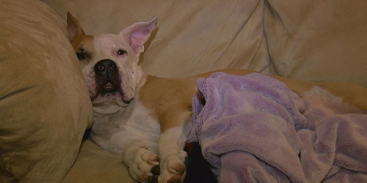 Lawton woman, service dog attacked by raccoon in home