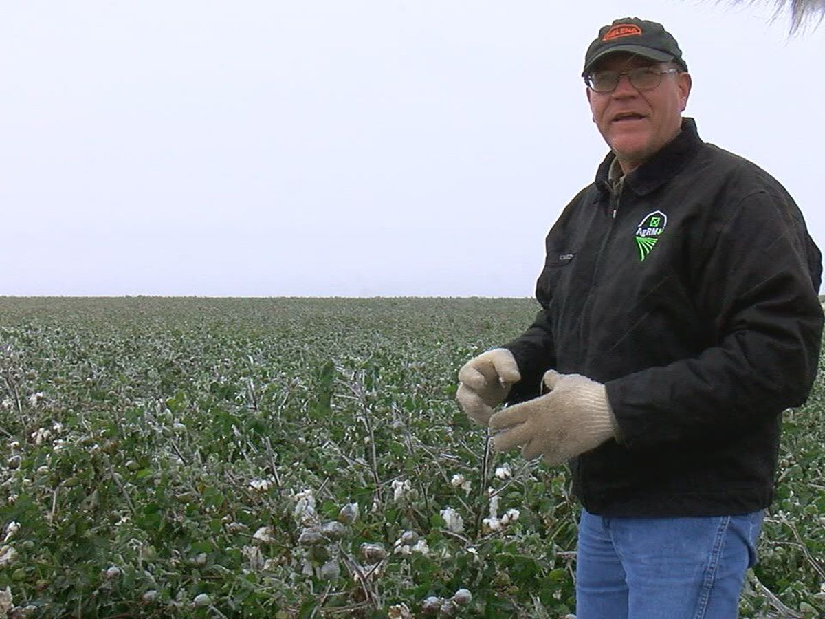 Local farmer discusses ice's impact on crops, cattle