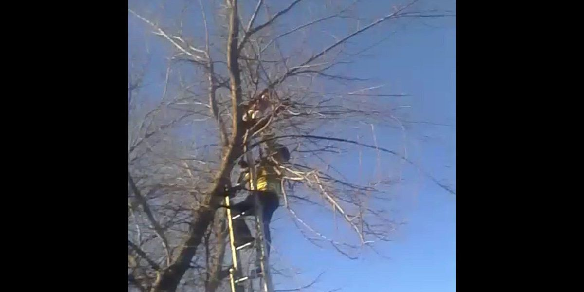 Child, 7, rescued from tree by Lawton Fire