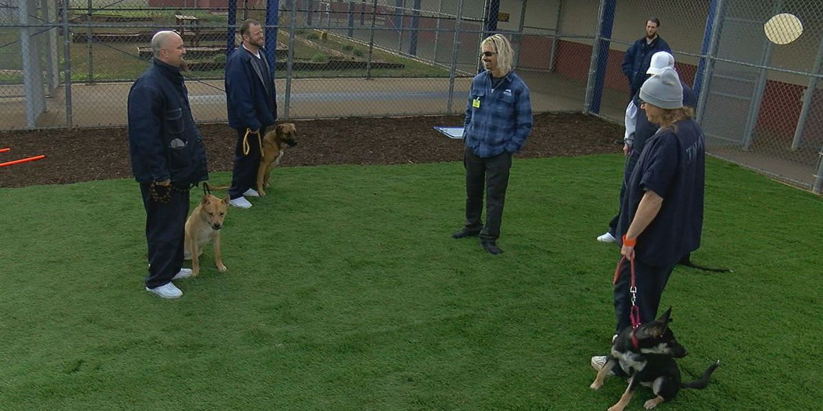 Inmates train shelter dogs in new Lawton prison program