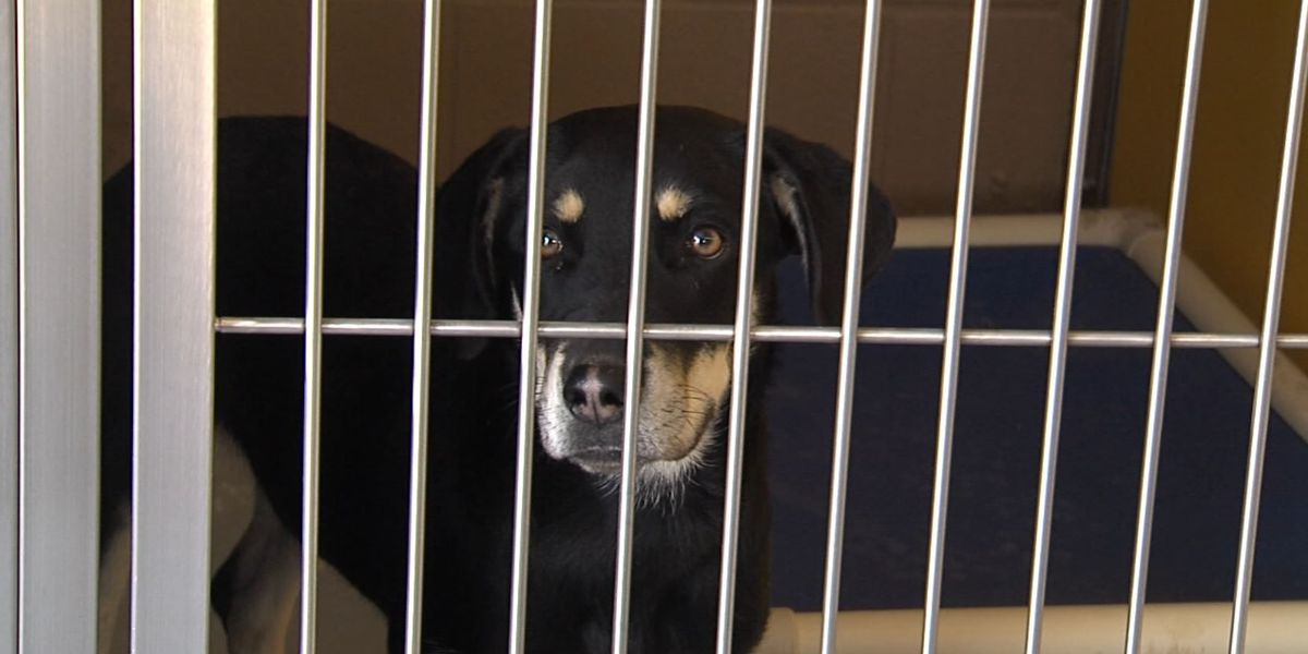 Altus Animal Welfare facility benefits from renovations