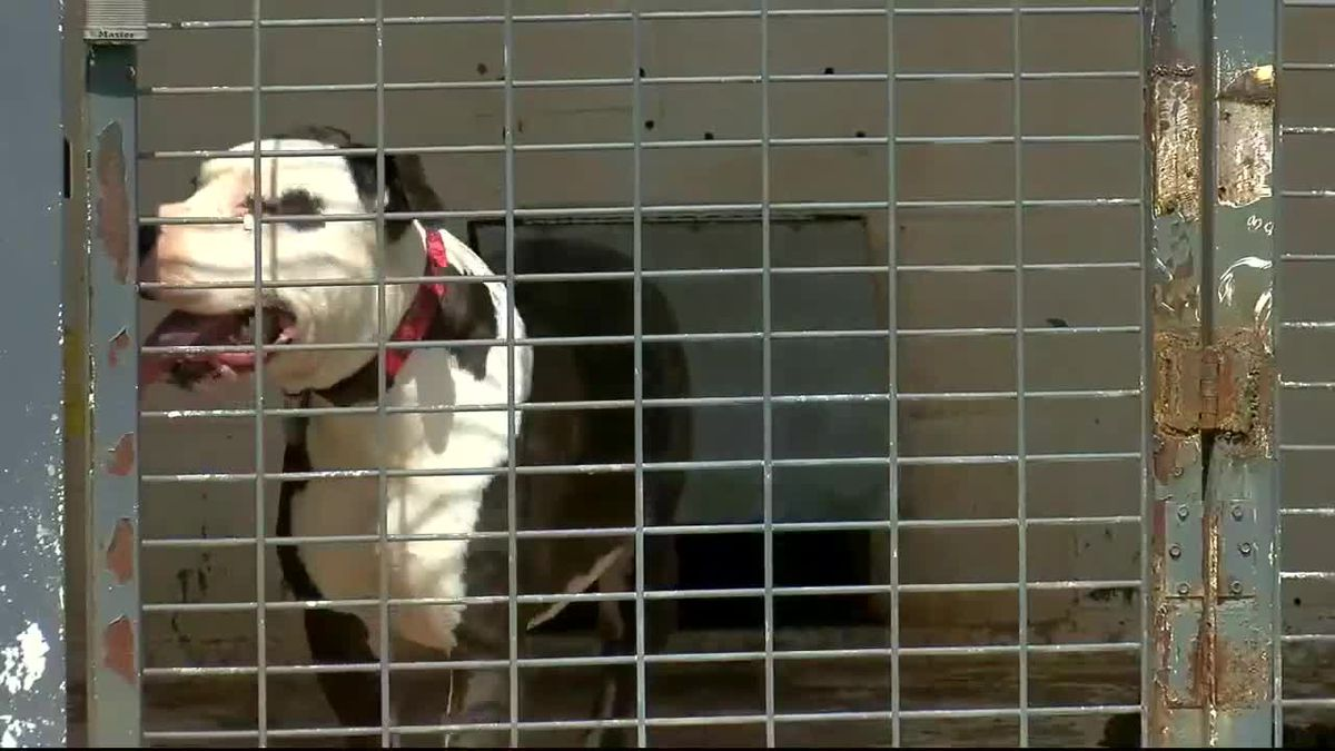 Local animal shelter in need of volunteers
