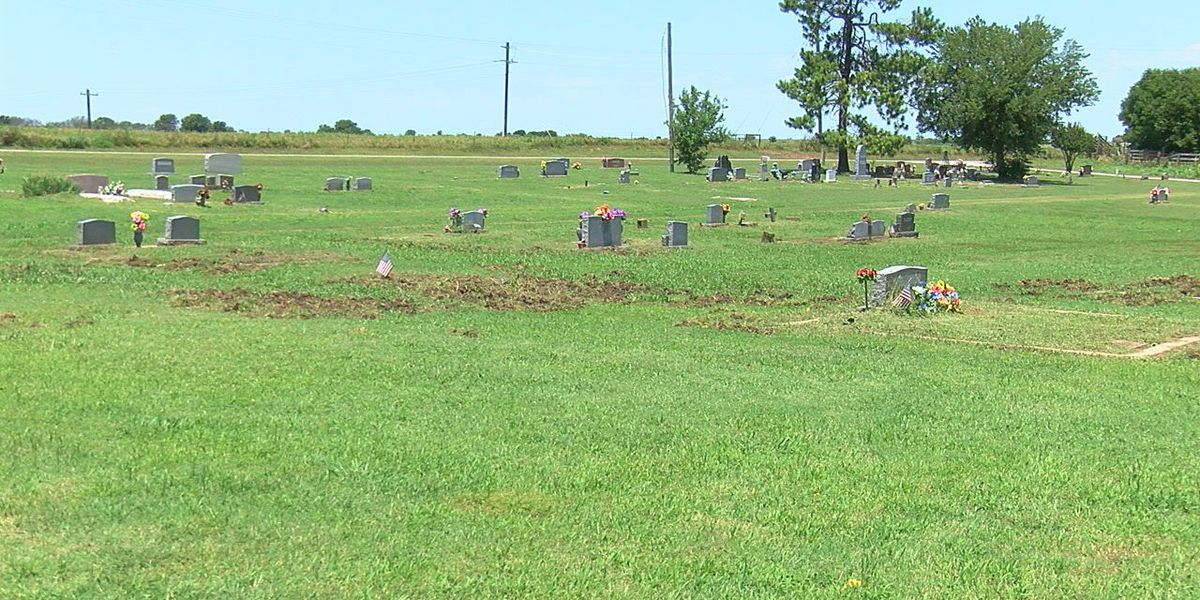 Feral hogs causing problems at cemetery