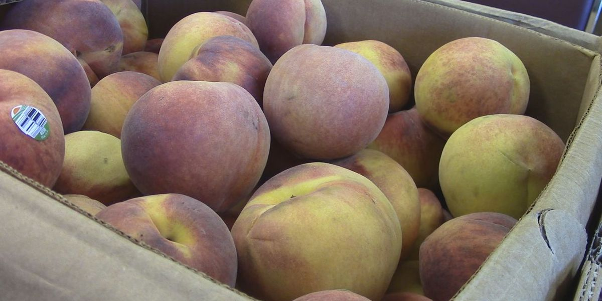 Salt of the Earth Ministries to give away thousands of pounds of produce