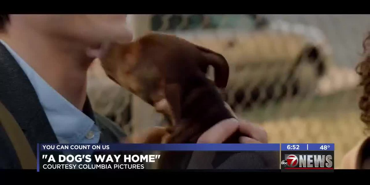 7News at the Movies: A Dog's Way Home and more