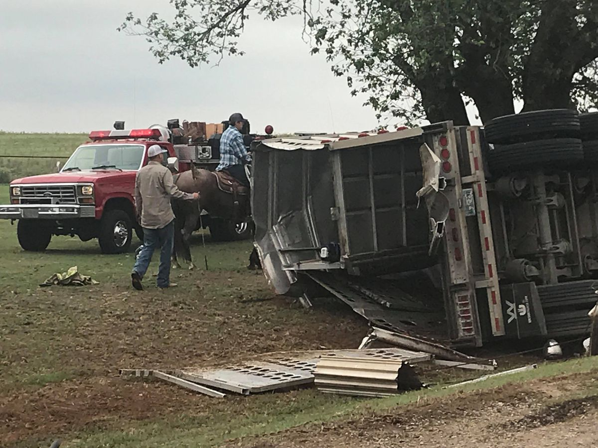UPDATE: Semi-collision injures driver, kills cattle