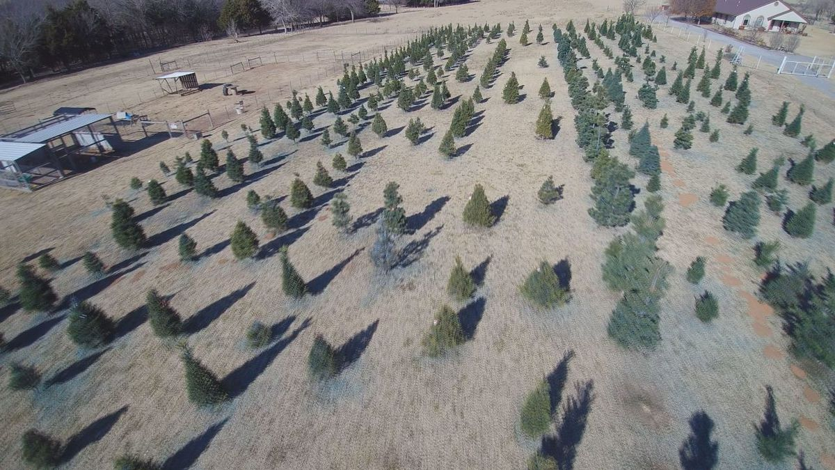 Christmas Tree Shortage.Southwest Oklahoma Feels Effects Of Christmas Tree Shortage