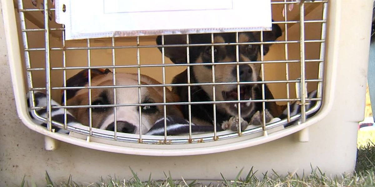 Cats, dogs get second chance through Wings of Rescue