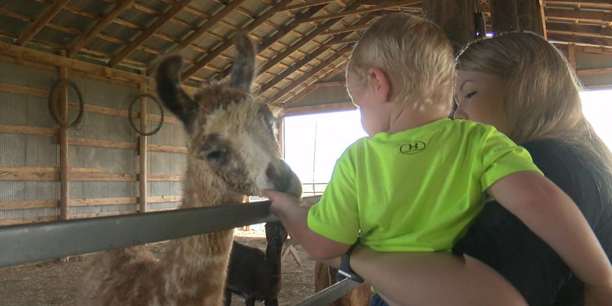 Families enjoy petting zoo in Walters