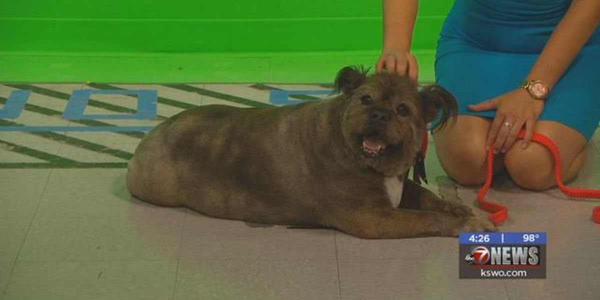 Furry Friend Friday: Meet Chewy