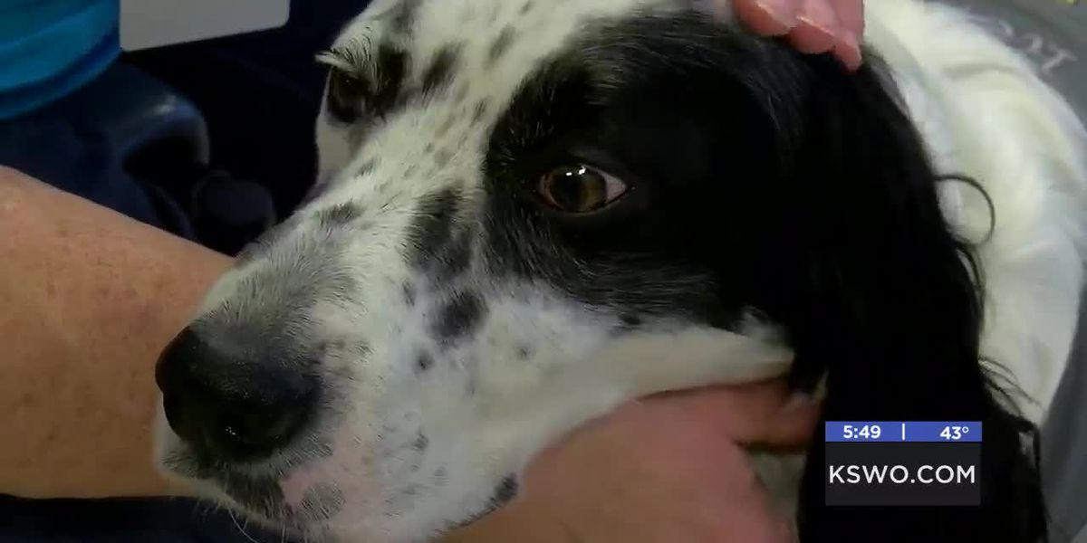 MedWatch: Paws with Love Therapy Dogs provide comfort and companionship-1-20-19