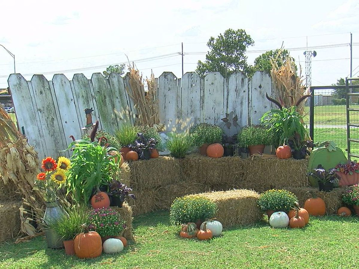 Pop-up pumpkin patch happening in Duncan this weekend