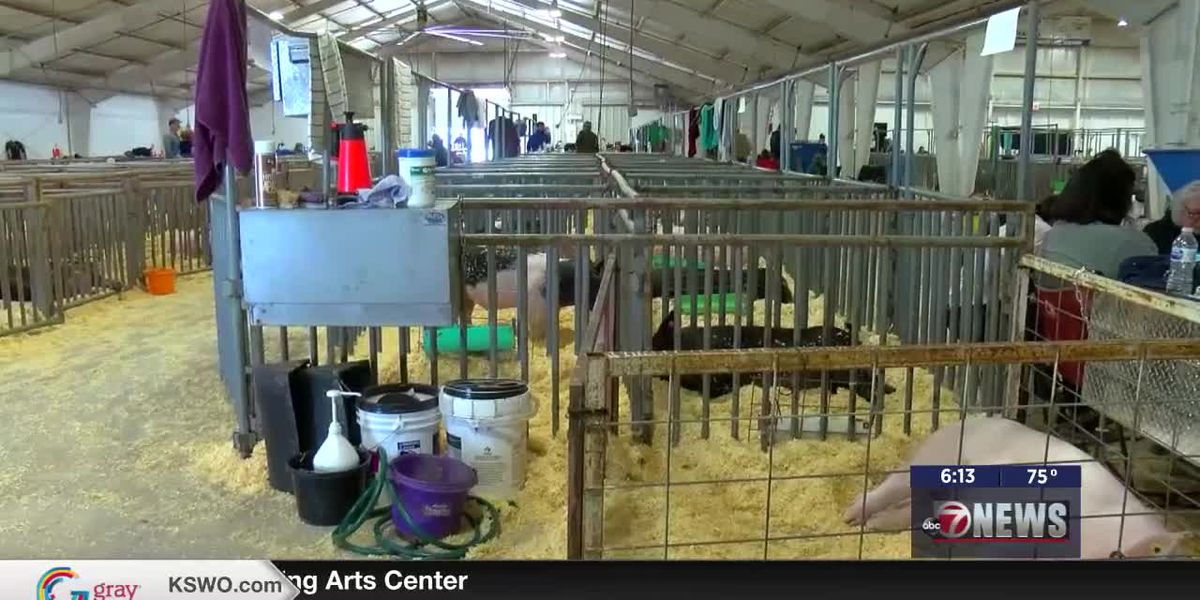 Livestock show goes on with extra precautions due to COVID-19, PEDv