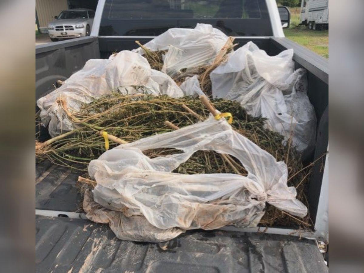 Trash bags of marijuana found floating down Cache Creek