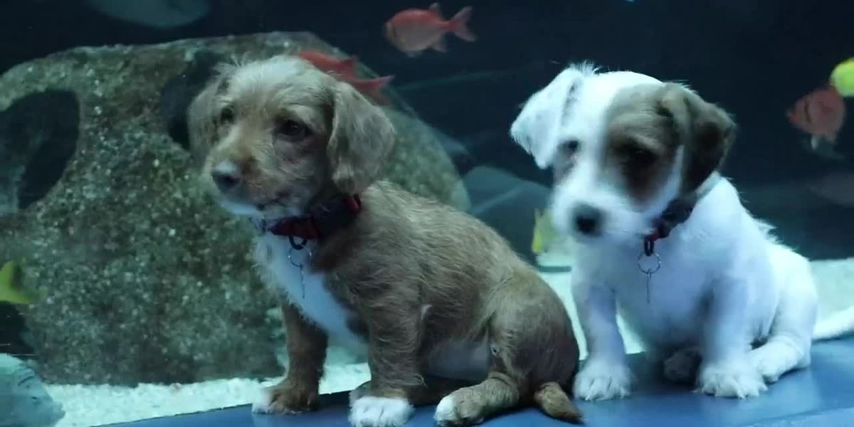 Puppies take over Georgia Aquarium