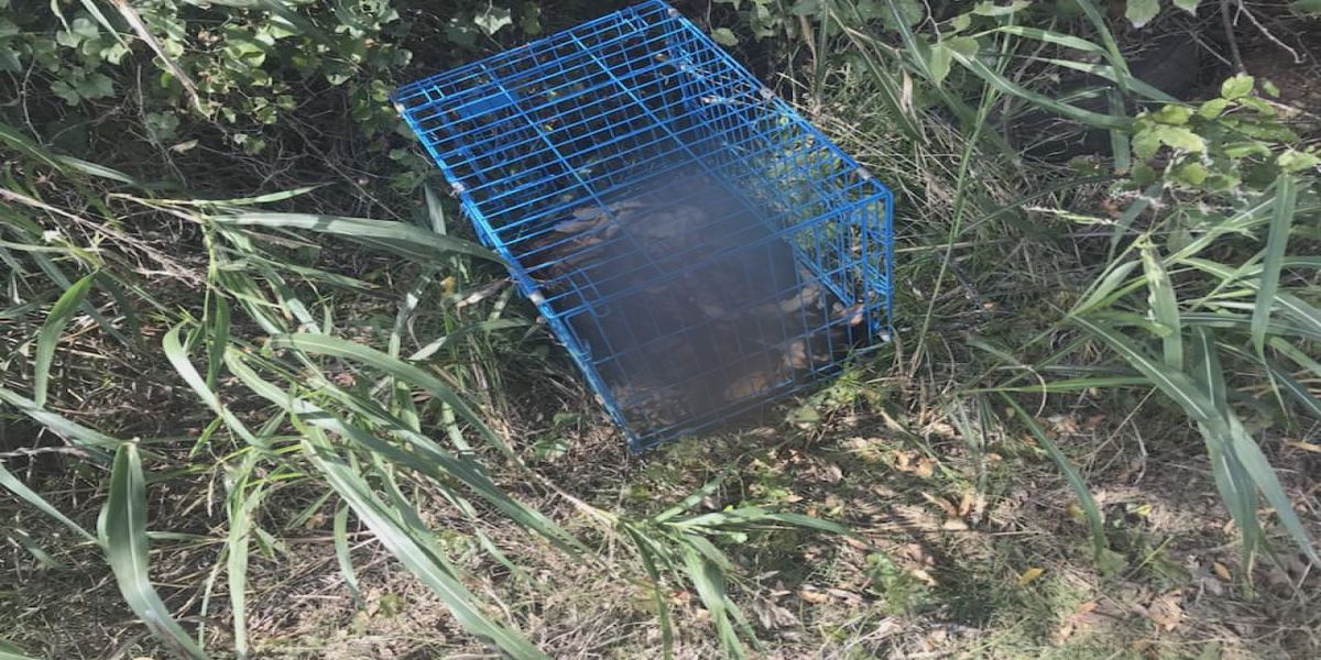 Warrants issued in Comanche Co. dog dumping case
