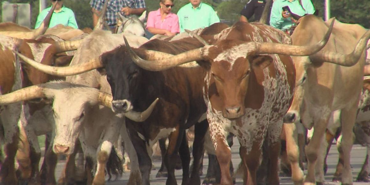 Altus Air Force Base hosts 19th annual Cattle Drive