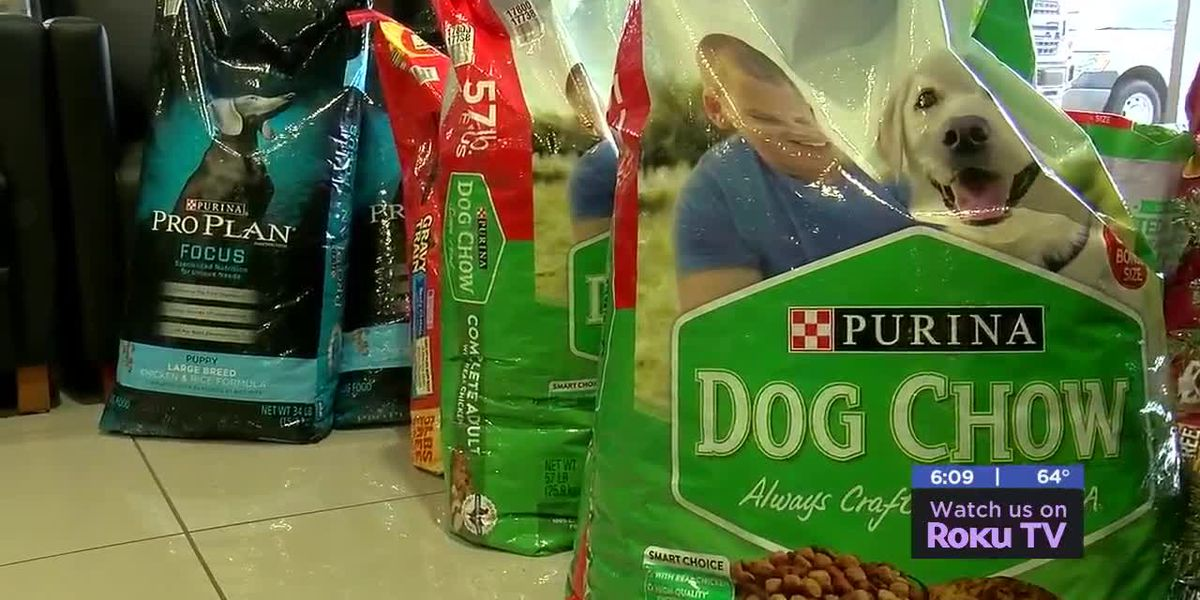 Billingsley family of dealerships' annual Santa Paws events helps animals in need