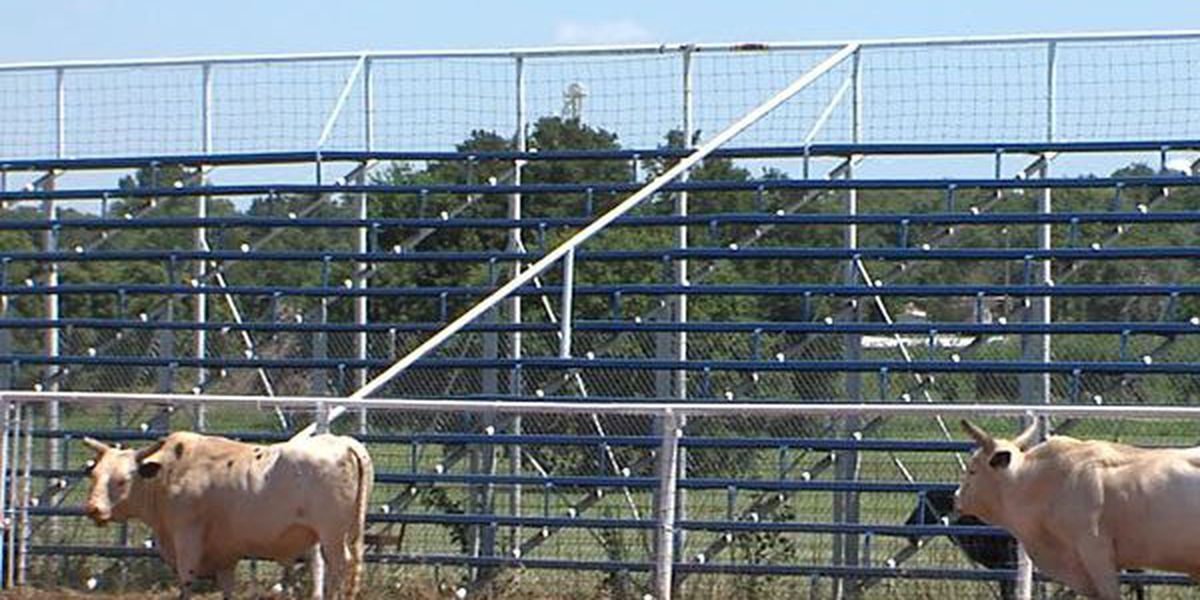 Walters Roundup Club hosts 53rd annual rodeo