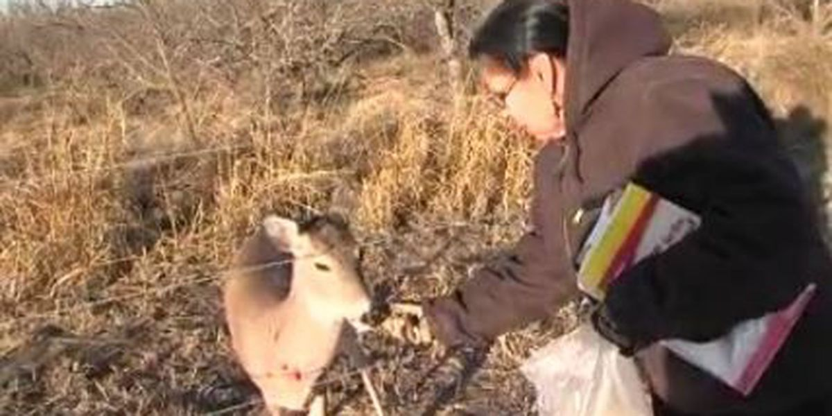Pet deer charms hearts in Cache